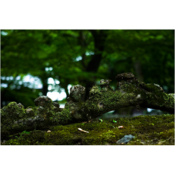 tatsuro_toufukuji_28.png